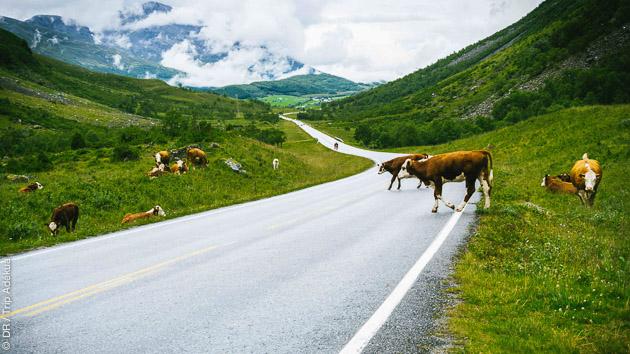 Un plan d'entrainement complet pour parcourir les routes de Norvège à vélo