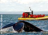 Jour 7 : Envoutante croisière d'observation des baleines - voyages adékua