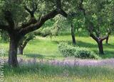 Jours 6 à 7 : cyclisme à Silves et Odelouca - voyages adékua