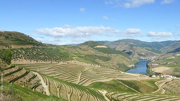 Un magnifique circuit cyclotouriste entre vignobles, villages et champs d'oliviers au Portugal